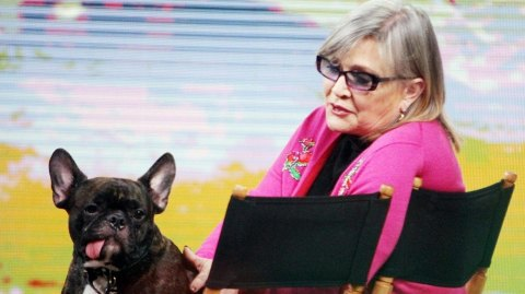 Episode VIII: Le chien de Carrie Fisher au casting ?!